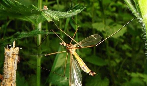 """疟疾感染创造出""""人体香味""""让蚊虫更爱你"""